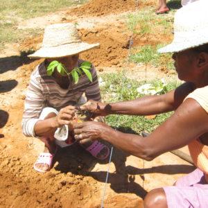 reforestation_soalandy_Madagascar_Hery_122011