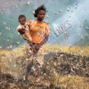 Cricket attack in Madagascar