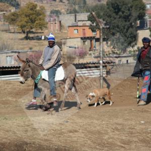 WM.Lesotho