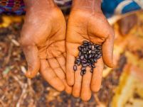 Tanzania: Farming on the slopes of inequality